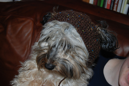 Doggy Kerchief